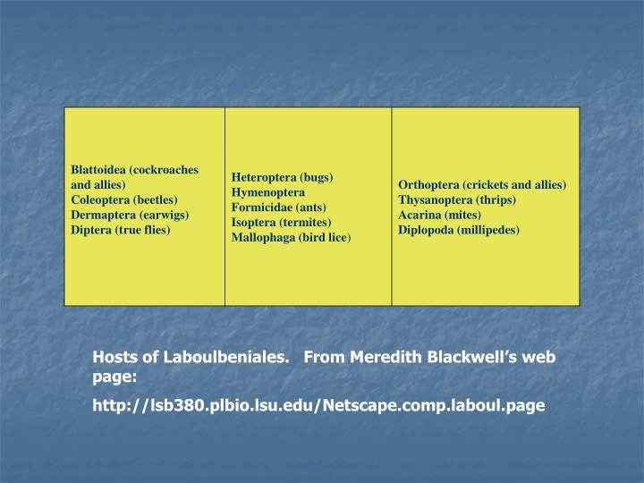 Hosts of Laboulbeniales.   From Meredith Blackwell's web page: