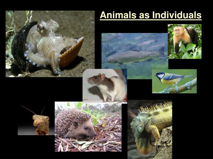 Animals as Individuals