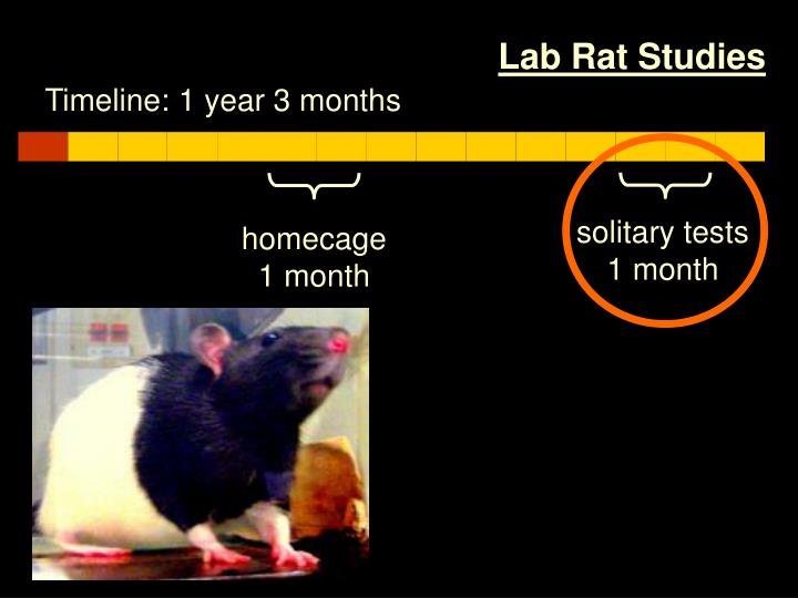 Lab Rat Studies