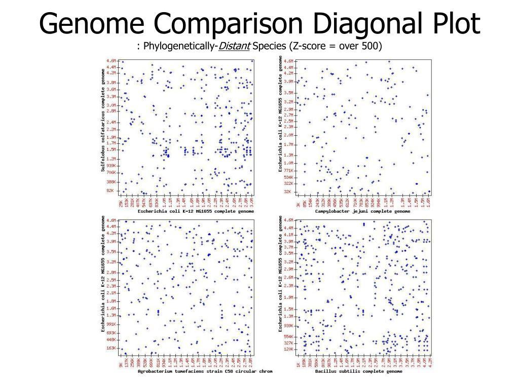 Genome Comparison Diagonal Plot