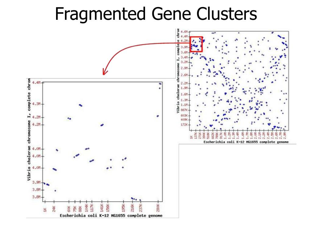 Fragmented Gene Clusters