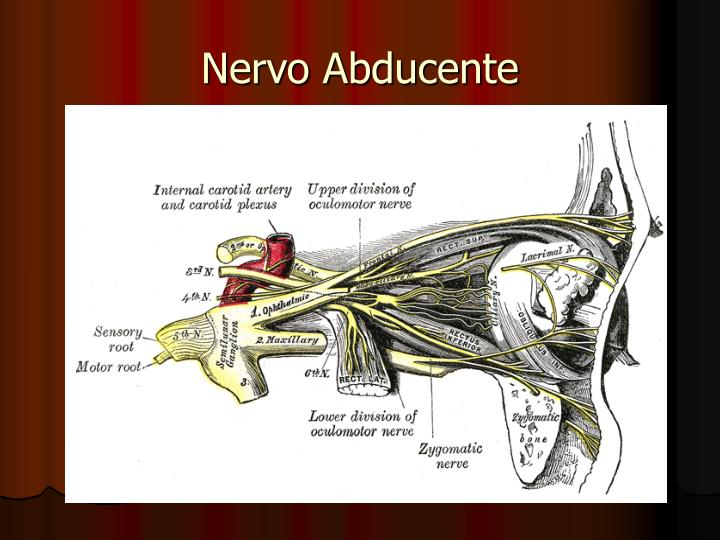 Nervo Abducente