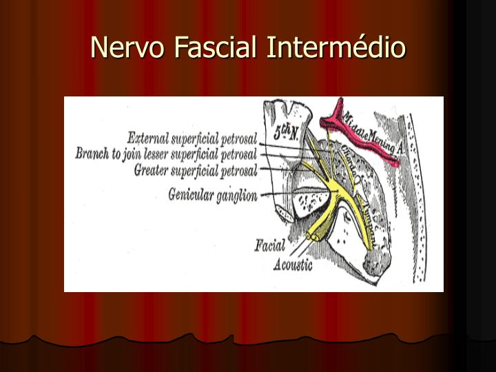 Nervo Fascial Intermédio