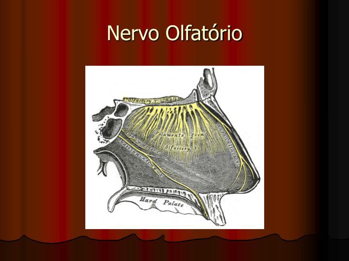Nervo Olfatório