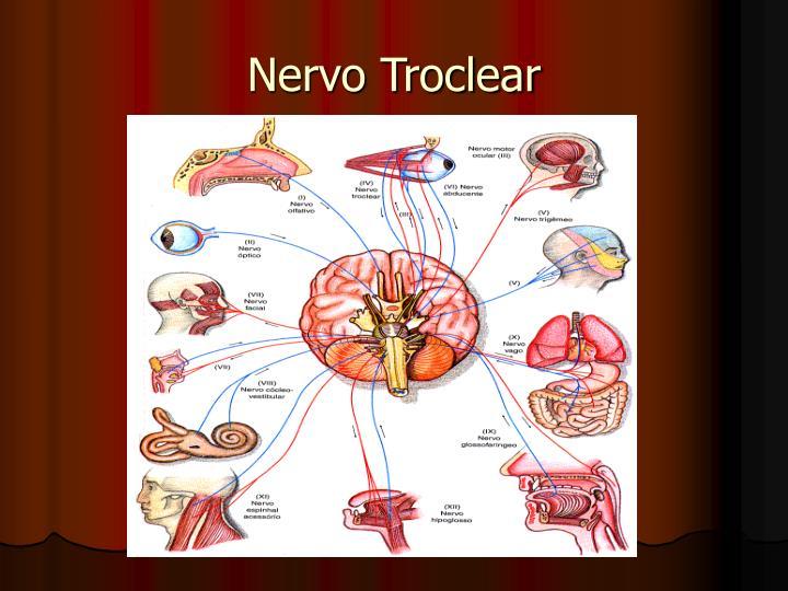 Nervo Troclear