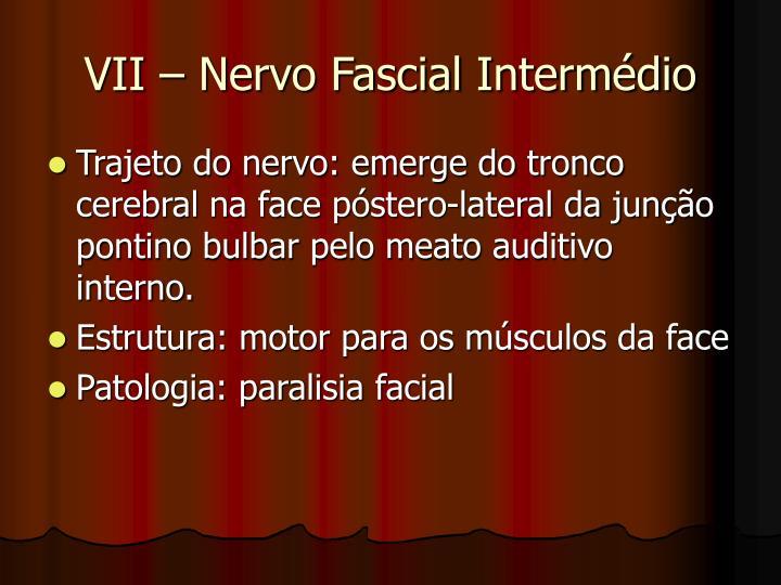 VII – Nervo Fascial Intermédio
