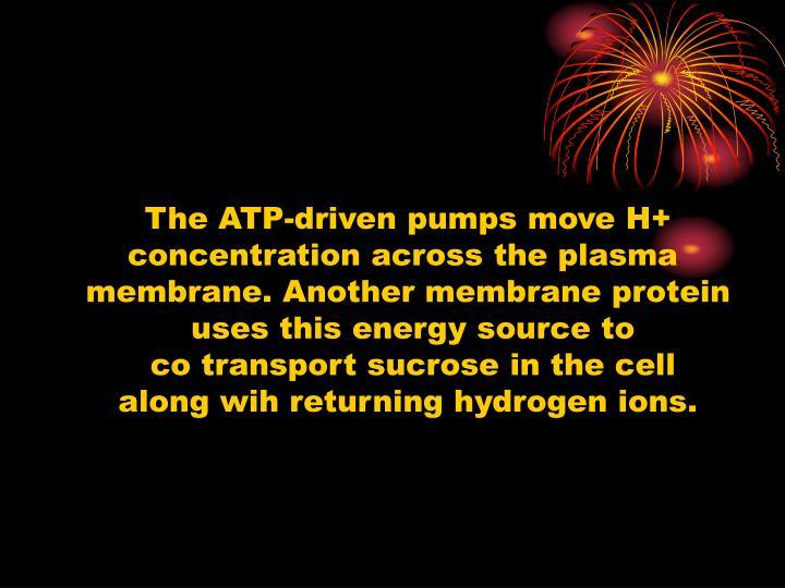 The ATP-driven pumps move H+