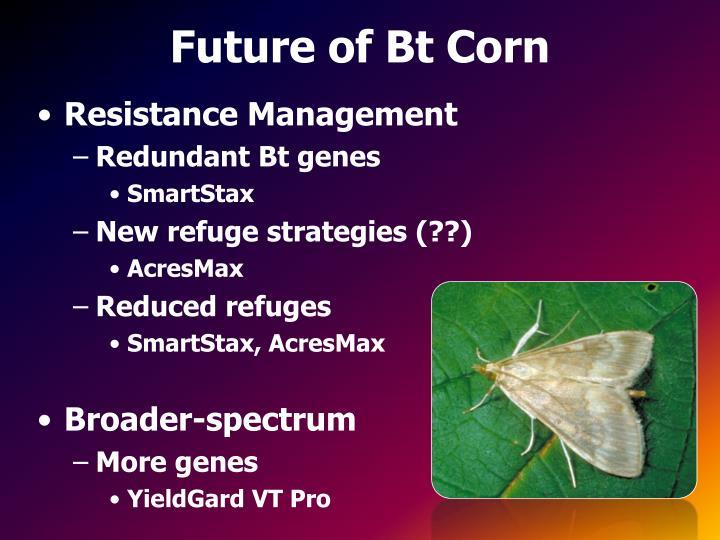 Future of Bt Corn
