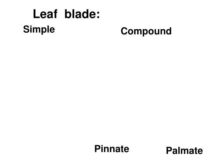 Leaf  blade: