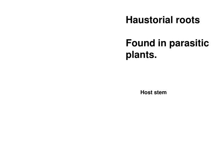 Haustorial