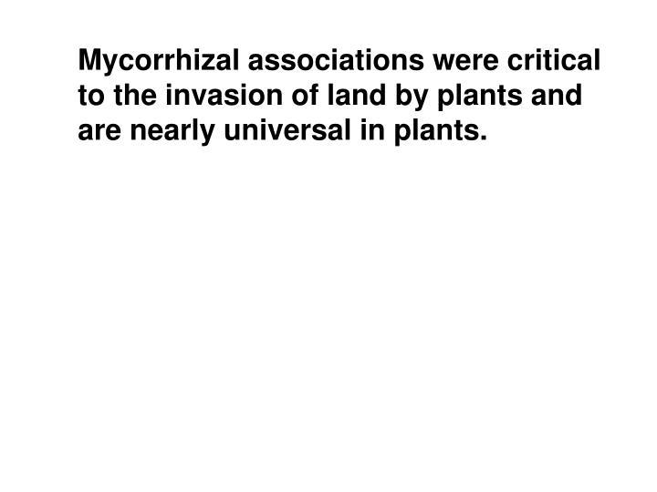 Mycorrhizal