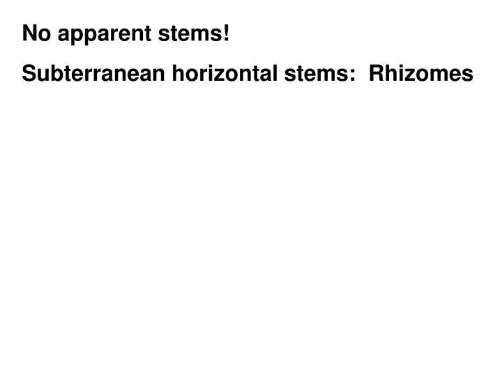 No apparent stems!