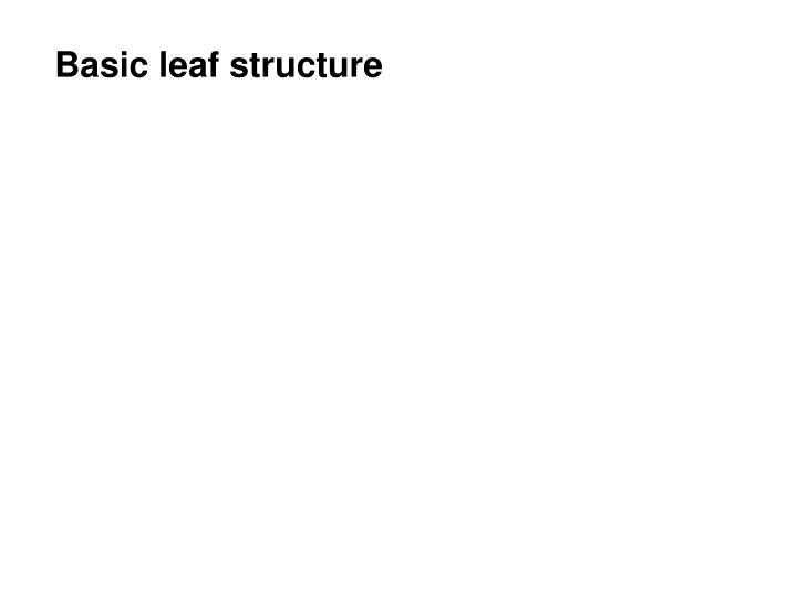 Basic leaf structure