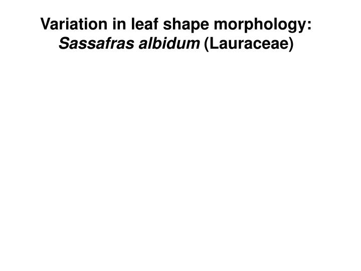 Variation in leaf shape morphology: