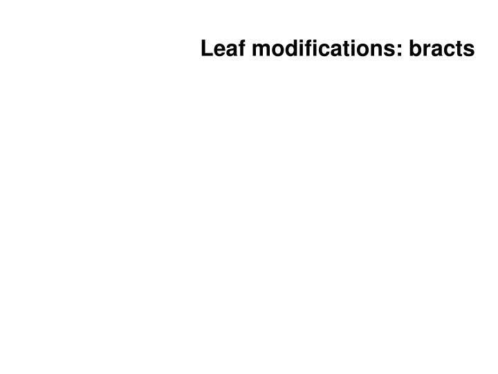 Leaf modifications: bracts