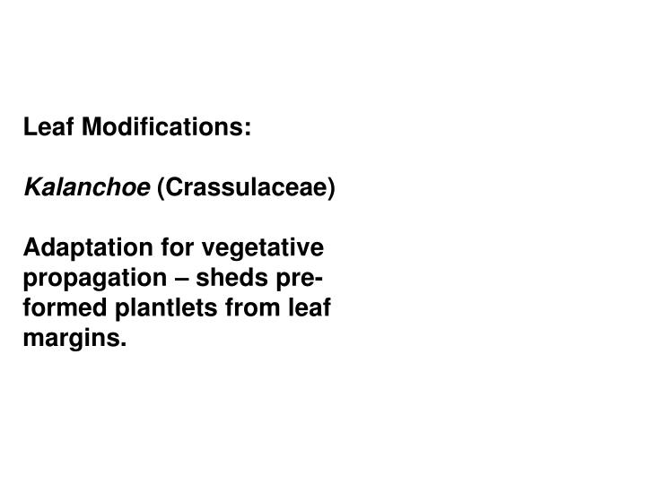Leaf Modifications: