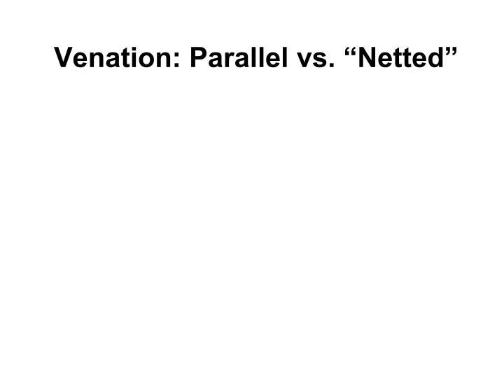 "Venation: Parallel vs. ""Netted"""
