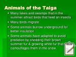 animals of the taiga