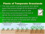 plants of temperate grasslands