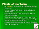 plants of the taiga