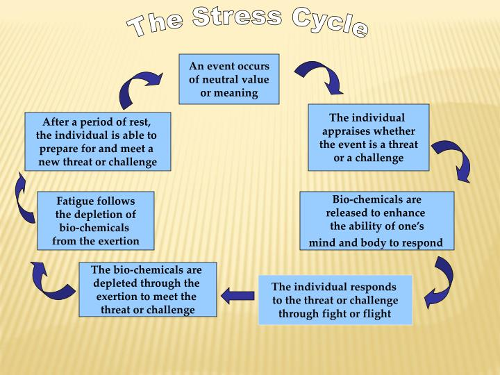 The Stress Cycle