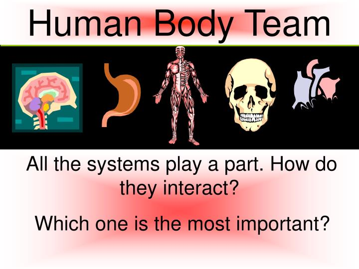 Human Body Team