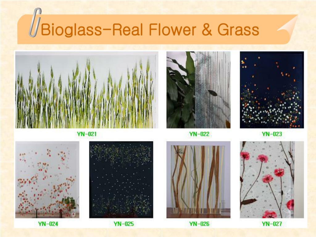 Bioglass-Real Flower & Grass