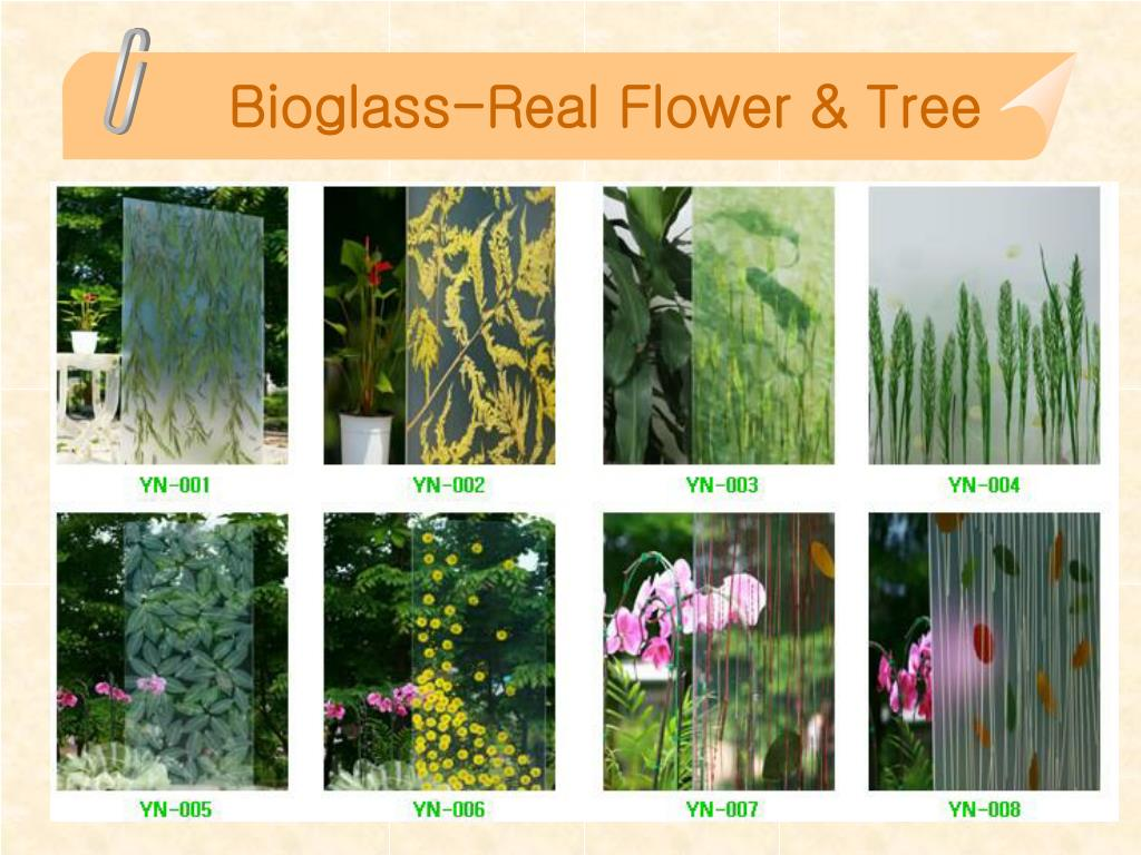 Bioglass-Real Flower & Tree