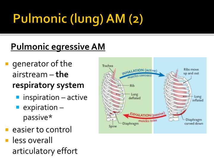 Pulmonic (lung) AM