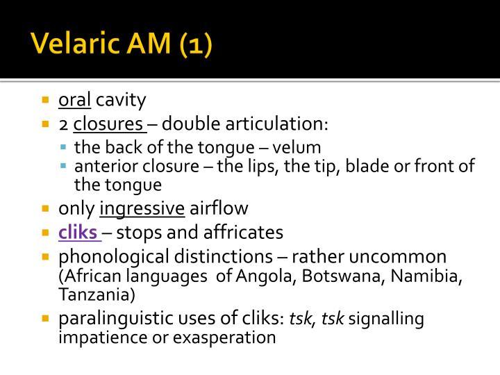 Velaric AM (1)