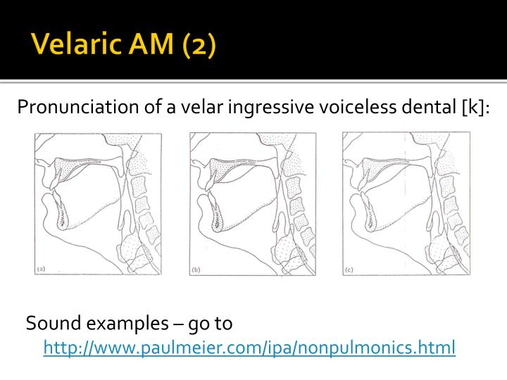 Velaric AM (2)