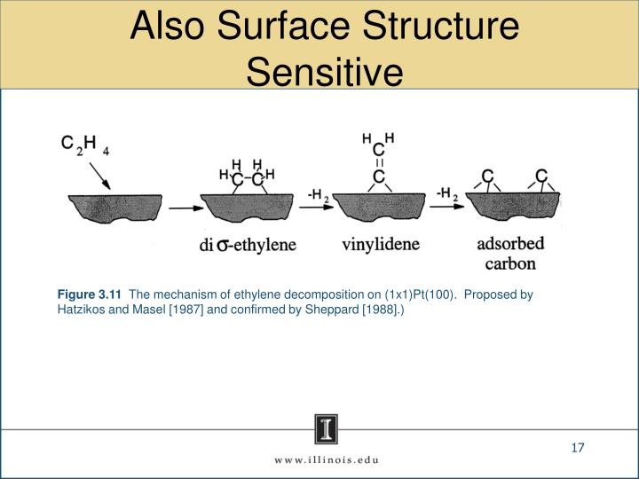 Also Surface Structure Sensitive