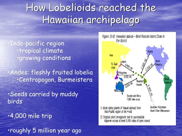 How Lobelioids reached the Hawaiian archipelago
