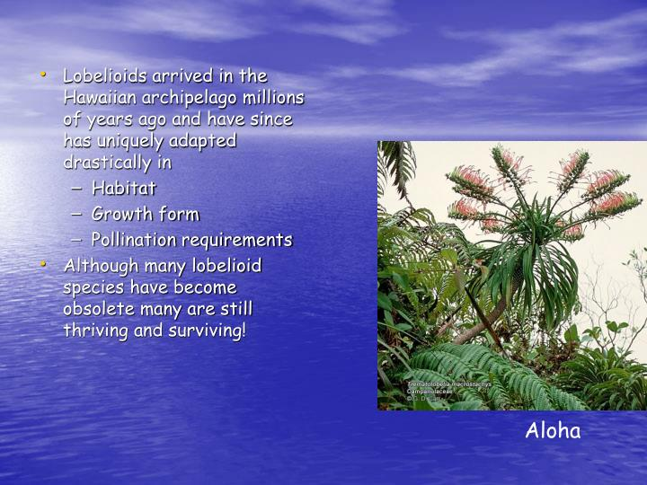 Lobelioids arrived in the Hawaiian archipelago millions of years ago and have since has uniquely adapted drastically in
