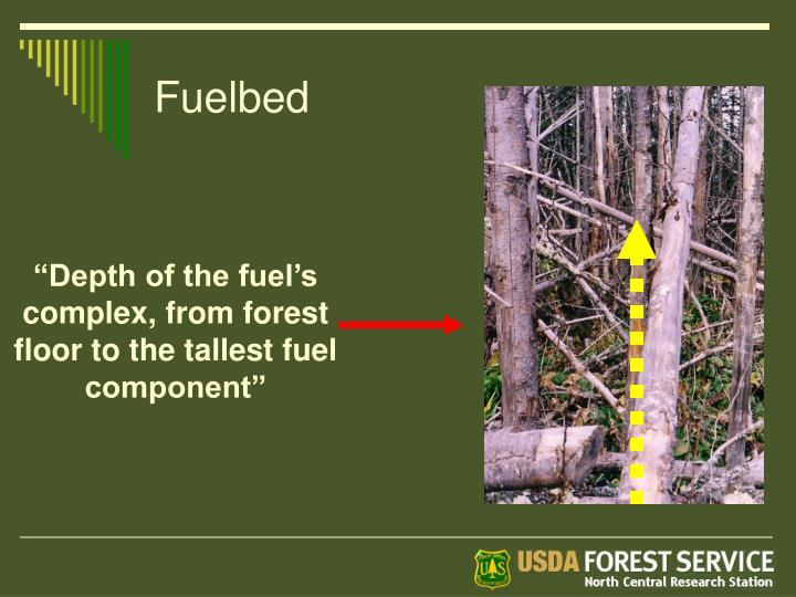 Fuelbed