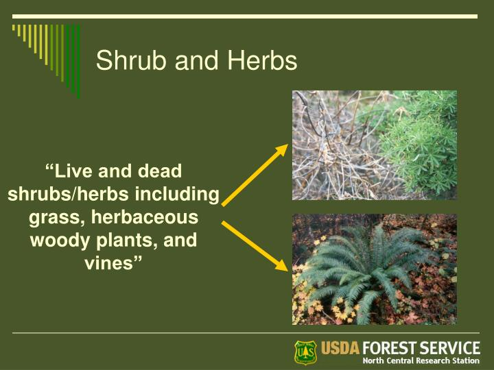 Shrub and Herbs