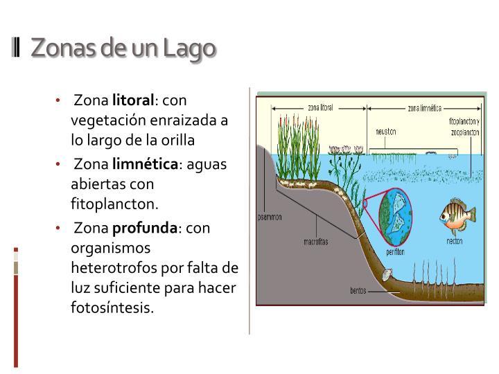 Zonas de un Lago