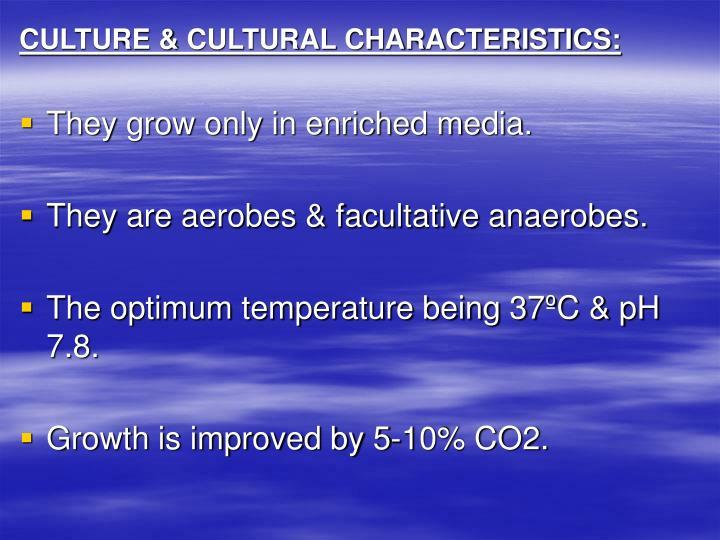 CULTURE & CULTURAL CHARACTERISTICS: