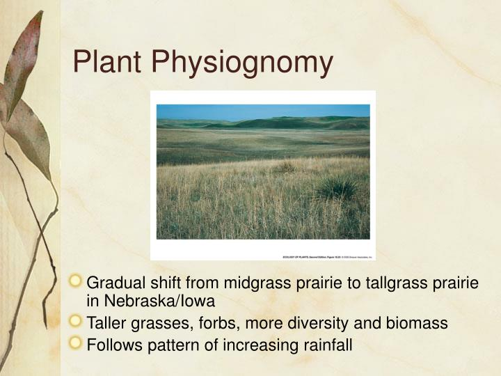 Plant Physiognomy
