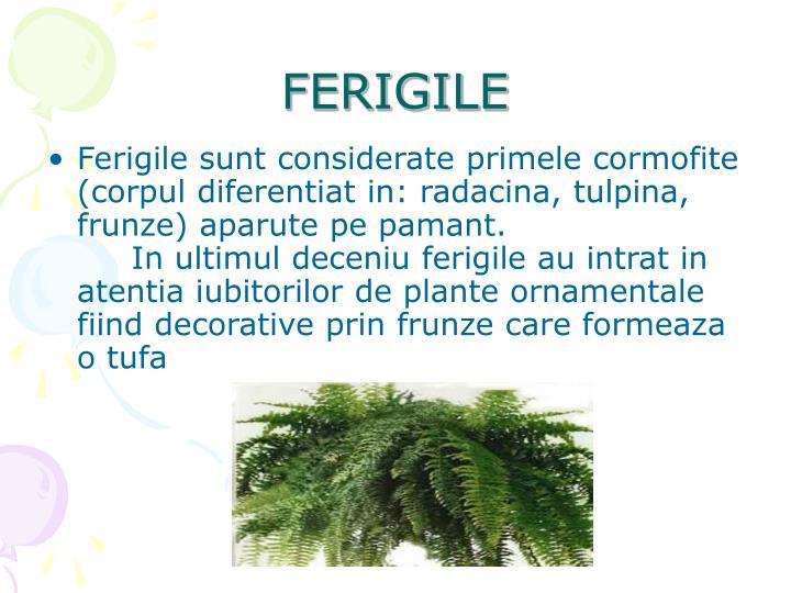 FERIGILE