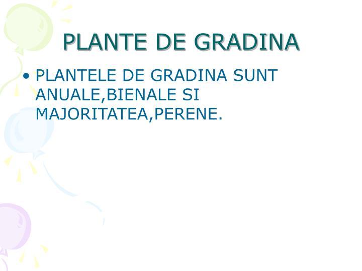 PLANTE DE GRADINA
