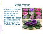 violetele