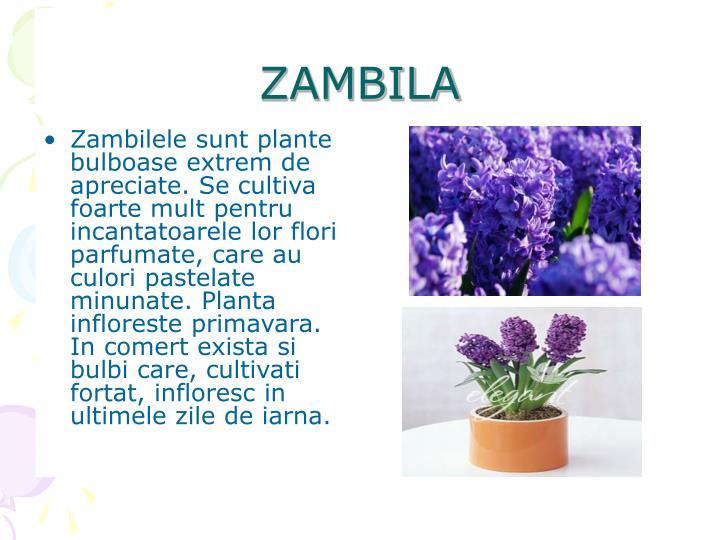 ZAMBILA