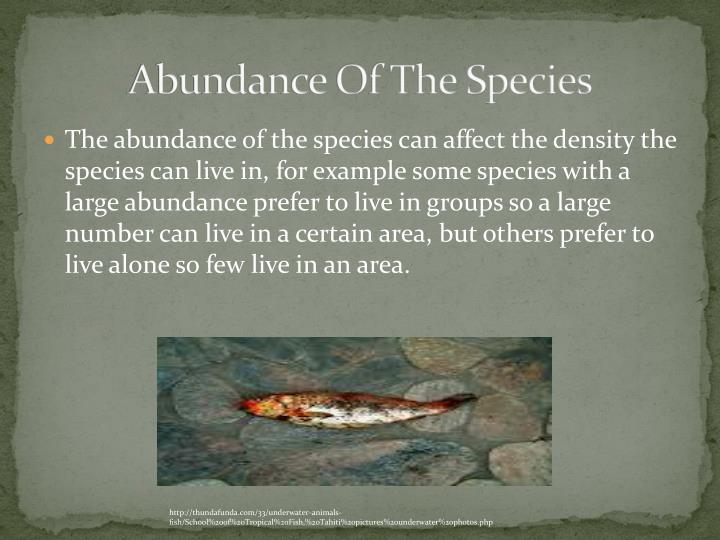 Abundance Of The Species