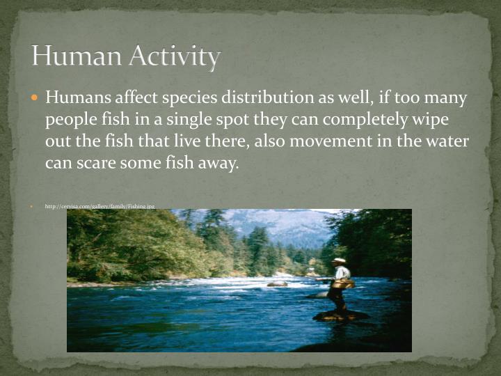 Human Activity