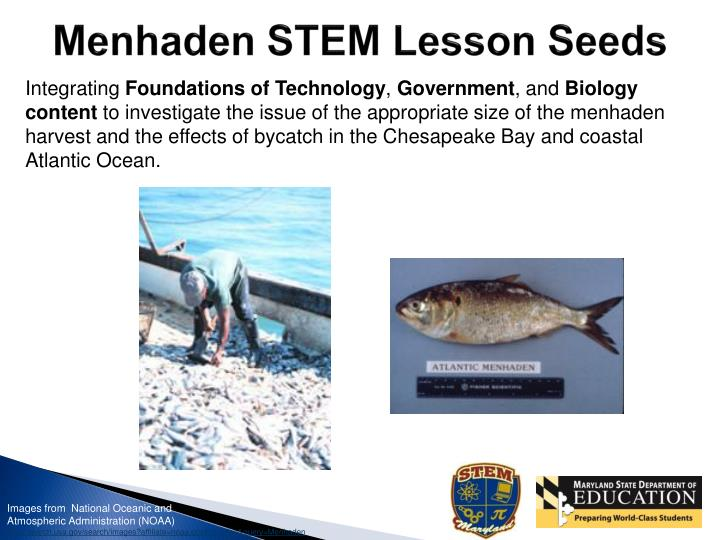 Menhaden STEM Lesson Seeds