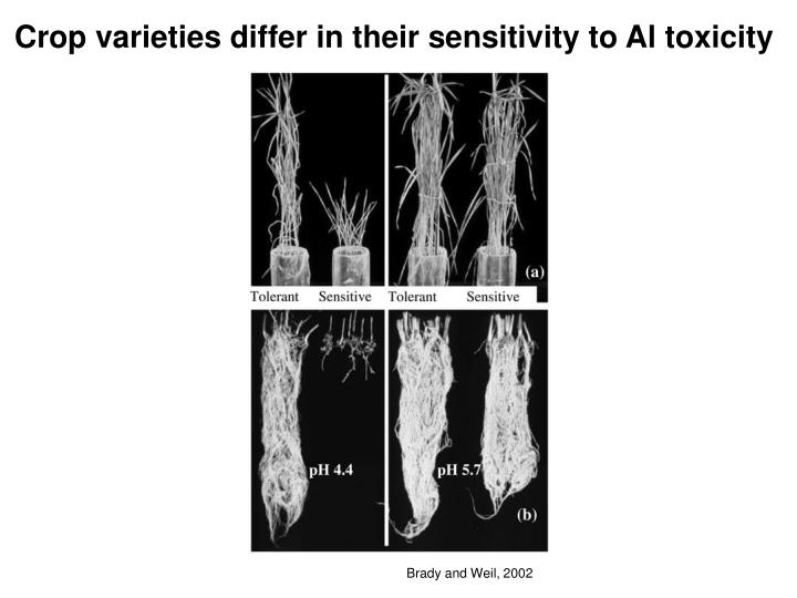 Crop varieties differ in their sensitivity to Al toxicity
