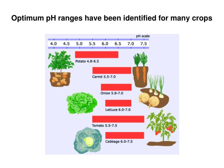 Optimum pH ranges have been identified for many crops