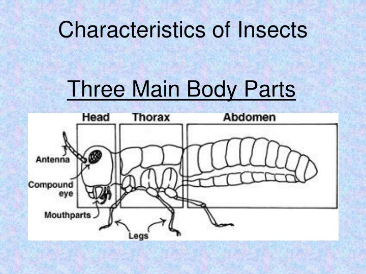 PPT - INSECT MOUTHPART LAB PowerPoint Presentation - ID ...