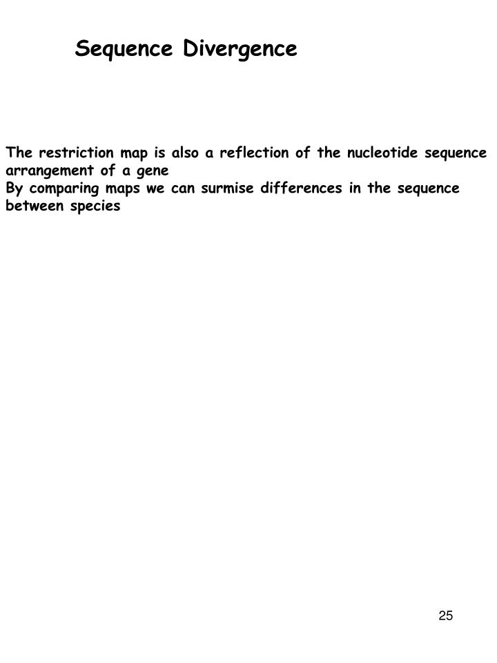 Sequence Divergence
